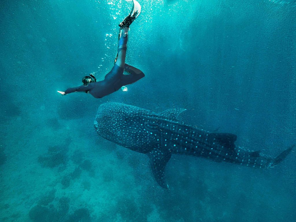 A girl is diving with a whale shark