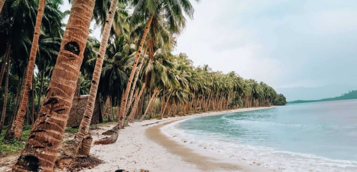 The ultimate Philippines Guide: long beach with blue water and many palm trees