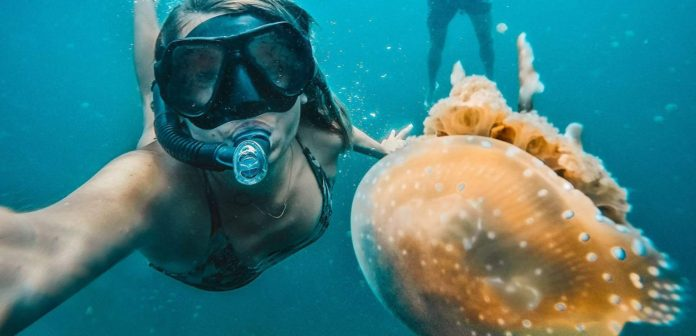 Togean Islands Guide: A girl is snorkeling with a jelly fish.